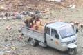 【視頻】 武陵源區集中銷毀一批問題食品