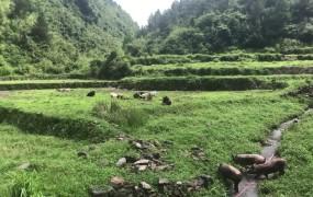 《美丽乡村行》2019-07-07 蒋宗要:生态养殖托起我的脱贫致富梦