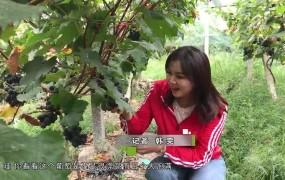 《美丽乡村行》2019-09-01 张仁前:葡萄架下的致富梦
