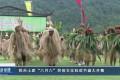 """【视频】我市土家""""六月六""""民俗文化狂欢节盛大开幕"""