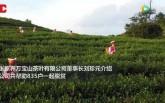 【视频】张家界洪家关白族乡采茶女:靠双手脱贫致富