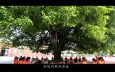 【公益广告】守护绿色根脉 留住美丽乡愁