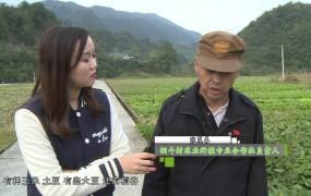 """【视频】张茂春:心有所""""薯""""的丰收致富路"""