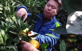 [视频]李刚勇:种出村民致富橘