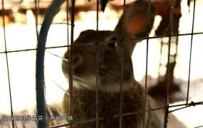 """【视频】全岸南:""""土兔""""生出的发家财"""