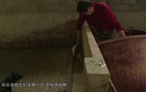 《美麗鄉村行》2019-05-12 卓志紅和他的生態黑豬