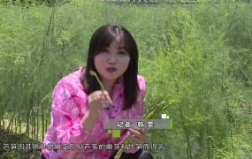 """《美麗鄉村行》2019-06-23 落地生根的""""綠財富""""(改)"""