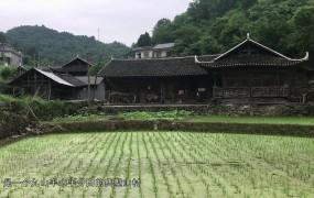 《美麗鄉村行》2019-06-09 山清水秀高坪村