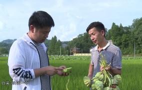 《美麗鄉村行》2019-07-28向志國:讓家鄉變成美麗鄉村