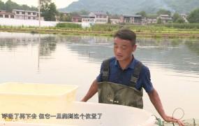 《美麗鄉村行》2019-07-14 寇敏:小龍蝦孕育大夢想