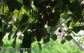 《美丽乡村行》2019-08-11李洪波:小水果种植大梦想