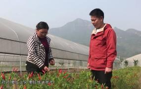 《美丽乡村行》2019-11-10 种菜巾帼廖启艳