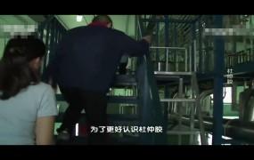 《美丽乡村行》2019-12-01杜仲胶改