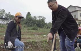 《美丽乡村行》2020-11-30谭宏涛:回乡创业种植中药材 带领村民奔向致富路