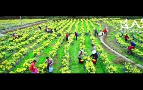 【宣传片】《这八年——精准扶贫在湖南》 第3集 《各辟蹊径》