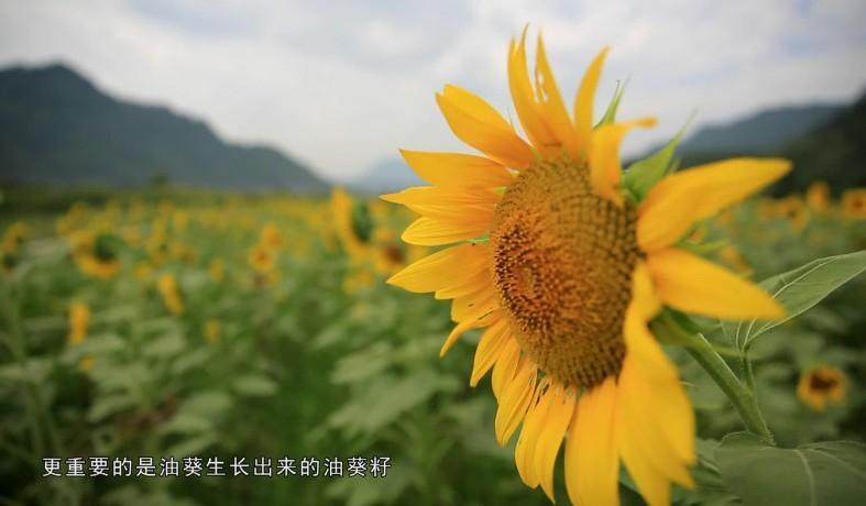 兴隆村:不一样的 乡村变化