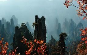 武陵源去年接待游客数、旅游总收入同比分别增长
