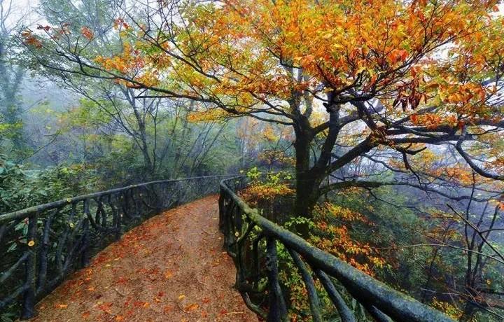 秋天,去看看自带滤镜的天门山