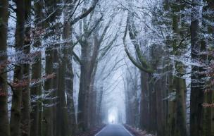 森林大道的美景